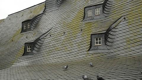 combattre la mousse sur le toit de sa maison. Black Bedroom Furniture Sets. Home Design Ideas